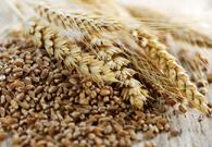 Cereali nella Dieta Vegetariana
