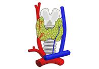 Tiroide e Metabolismo