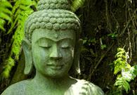 Benefici Olistici dello Yoga